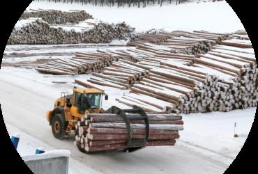 Logs at Sawmill